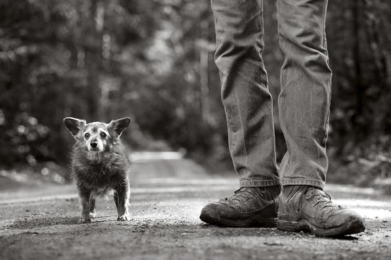 Рацу (21 год) собаки, фото собак, фотографии животных