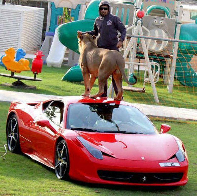 catsncars27 Хищные кошечки и дорогие машины: досуг арабского миллионера
