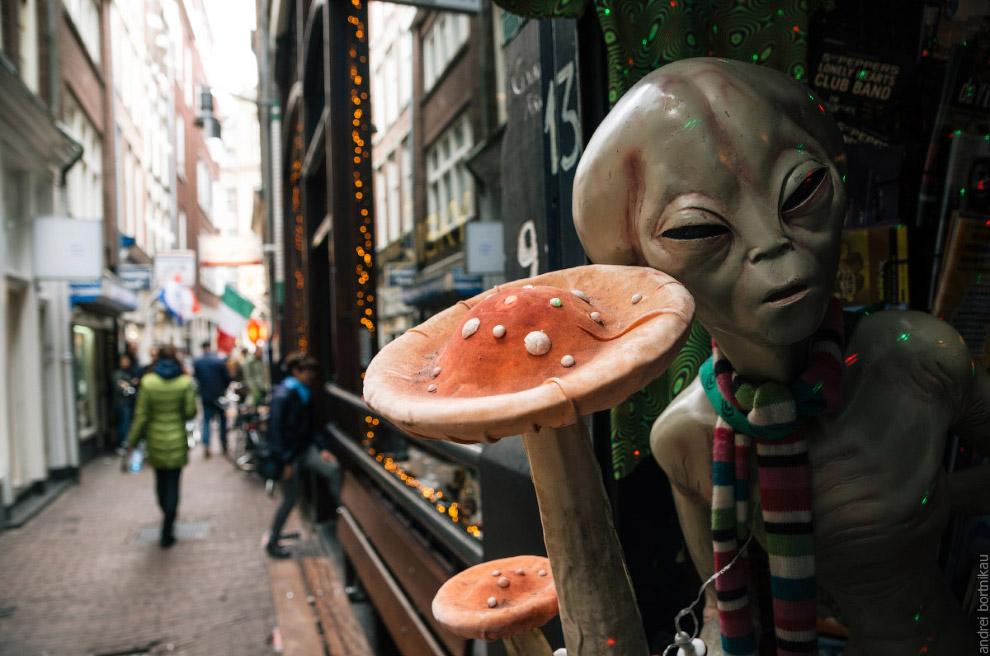 Magic mushrooms in a Smart Shop in Amsterdam city center.