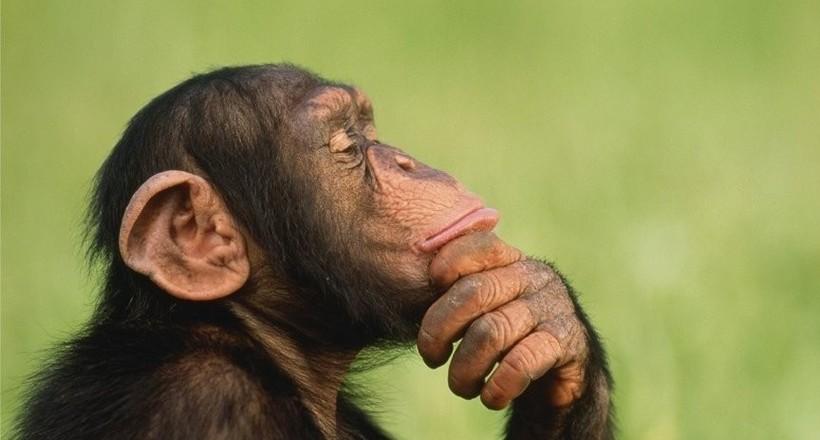 Ученые выяснили кто умнее: шимпанзе, собака или дельфин