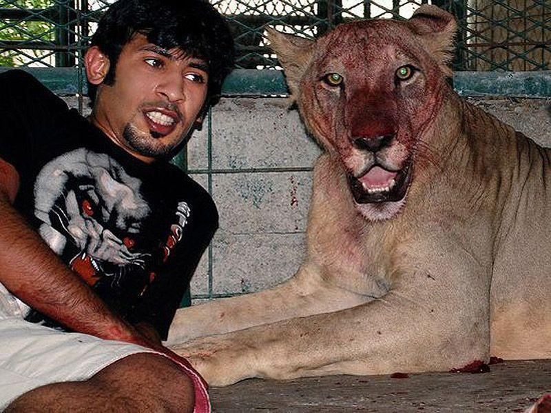 catsncars10 Хищные кошечки и дорогие машины: досуг арабского миллионера