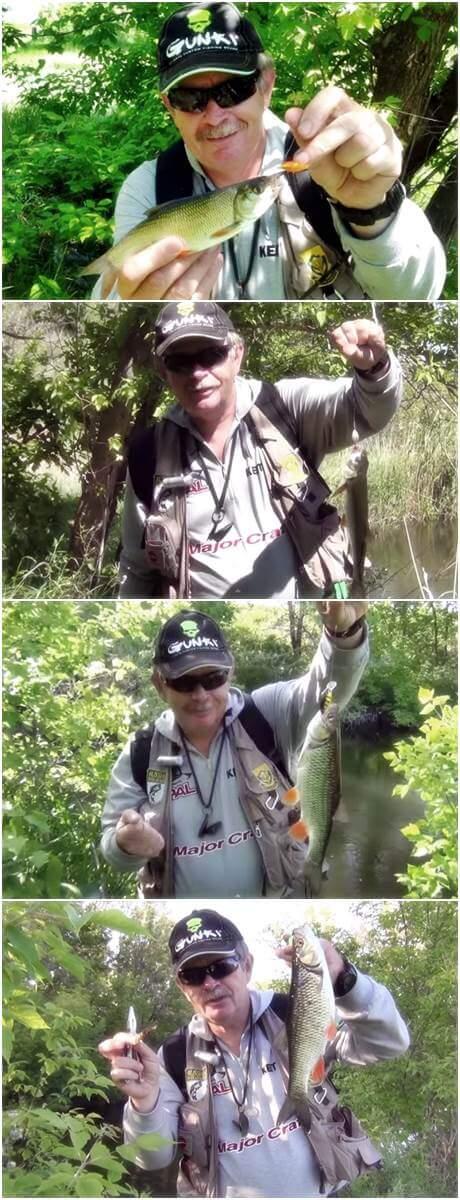 поверхностная ловля голавля