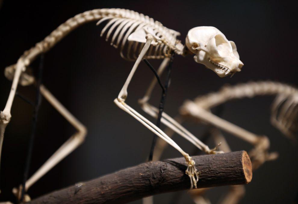gmoz10 Лондонский музей зоологии и сравнительной анатомии Гранта