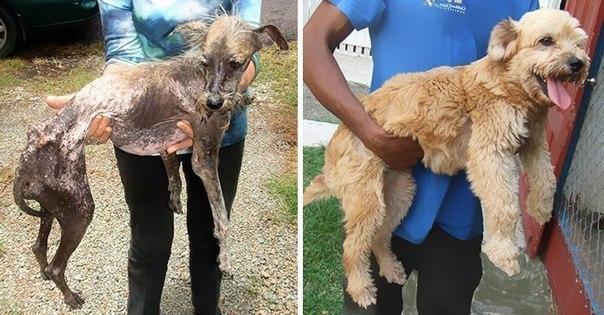 Люди, помогающие бездомным животным, заслуживают бесконечного уважения!