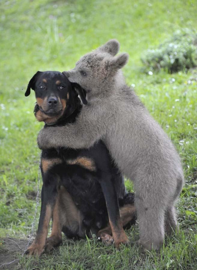 AnimalOddCouples 45 Самые странные парочки животных