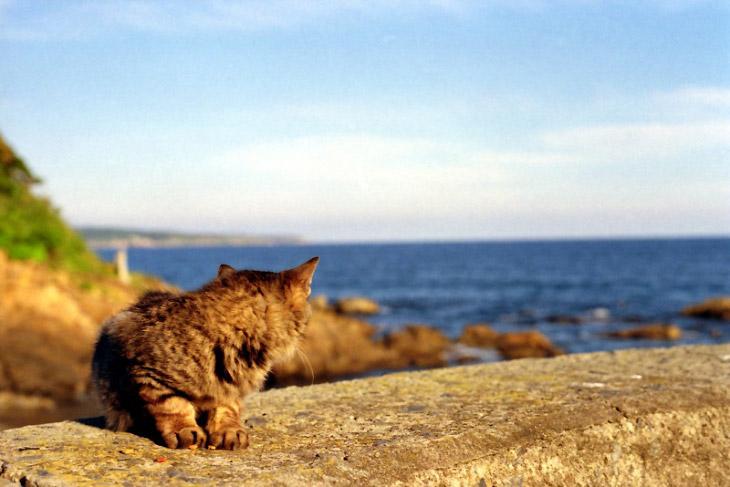 Тасиро, или Остров Кошек