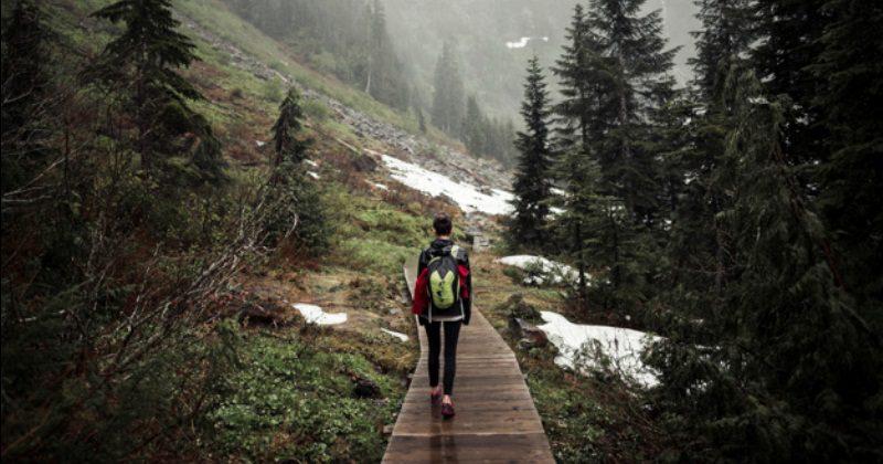 10 смертельных опасностей, подстерегающих внаших лесах