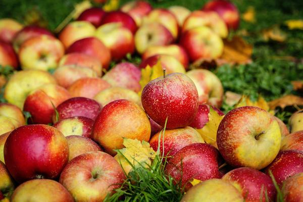 Самые сладкие сорта яблок