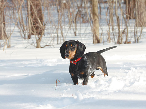 Удар по охотничьему собаководству