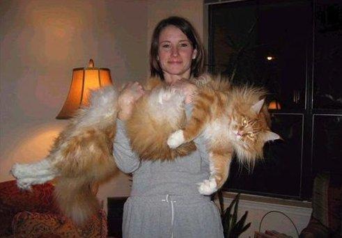 Как взвесить кота? Мужская и женская логика в действии