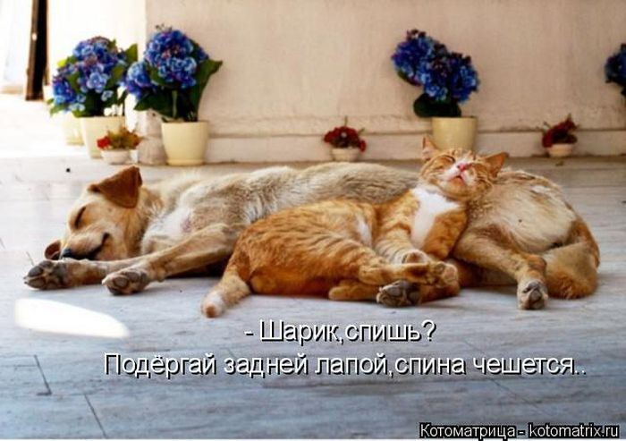 Шикарные котоматрицы для роскошного зверского позитива