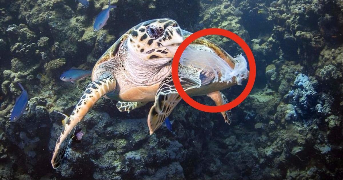 Целлофановый пакет застрял в пасти черепахи на 20 см вглубь! Она бы погибла, если бы не…