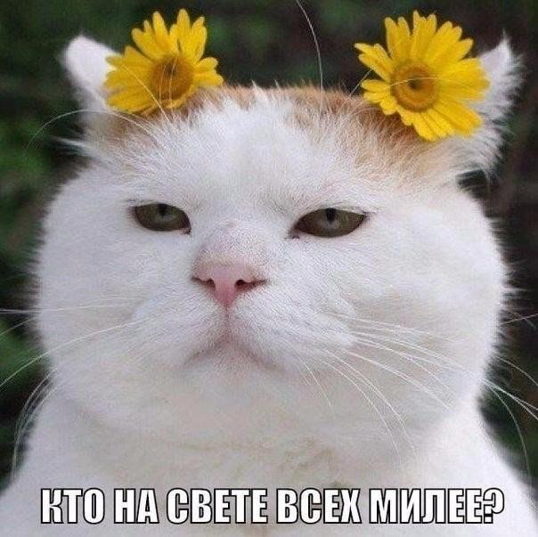 Кто на свете всех милее?)