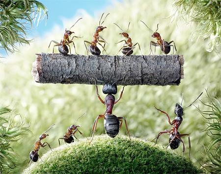 зачем муравьям лентяи