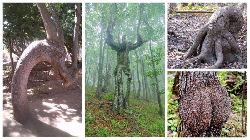 25 деревьев, которые похожи на что-то совсем другое