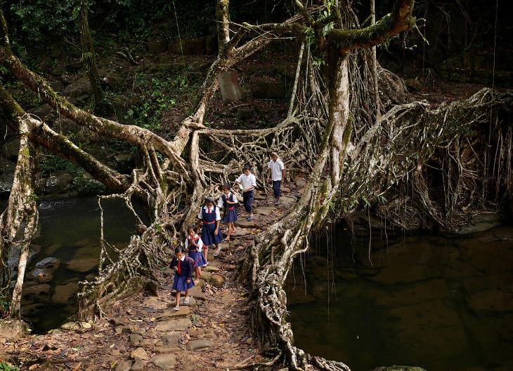 Мегхалая— самое влажное место на Земле