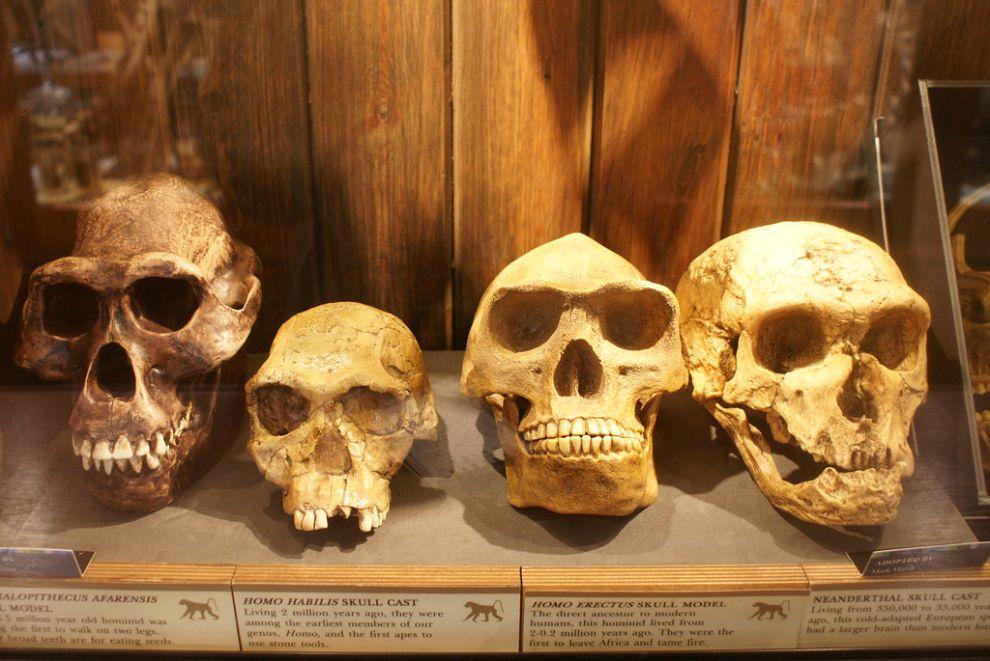 gmoz11 Лондонский музей зоологии и сравнительной анатомии Гранта