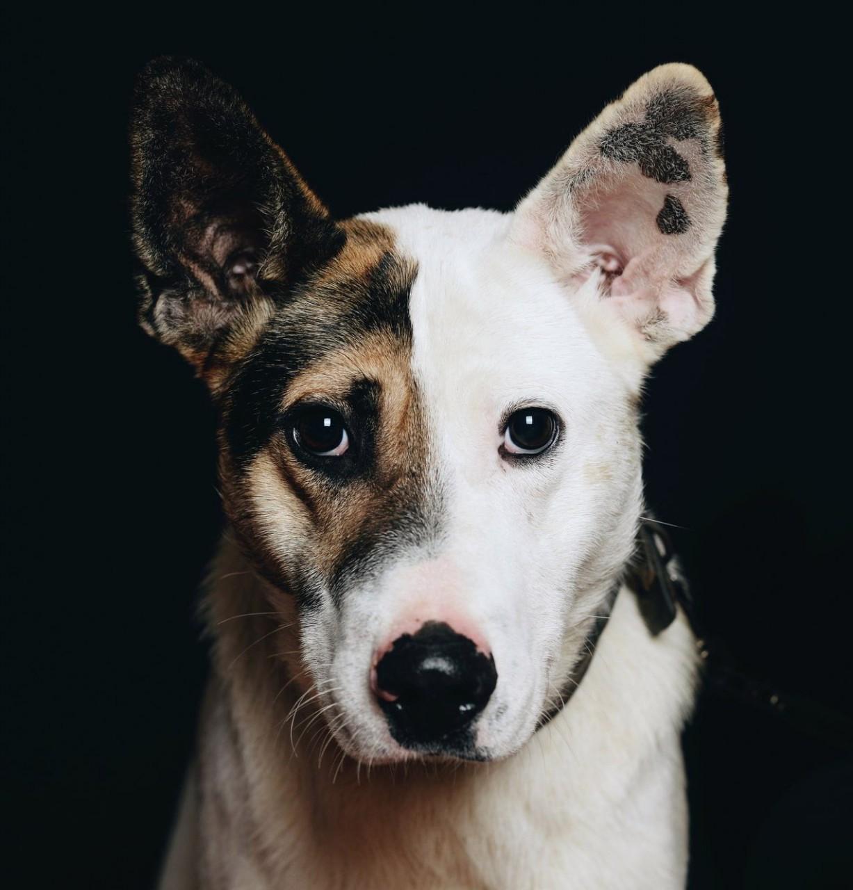 Фредди оказался никому не нужным… История щенка, который очень хотел дружить, но никто не отвечал ему взаимностью
