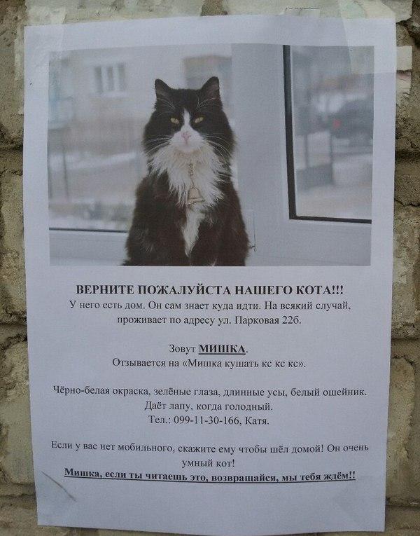 Очень умный кот кот, объявление