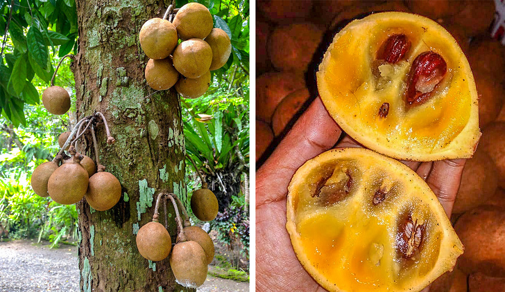 16 редких экзотических фруктов, которые вы увидите в первый раз (Вот бы пакау попробовать!)