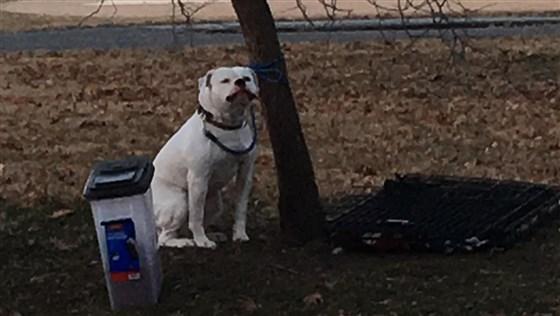 Парк. Мороз. И белый, как снег, пёс замерзает возле ящика с игрушкой… Может, вот эта записка всё объяснит?