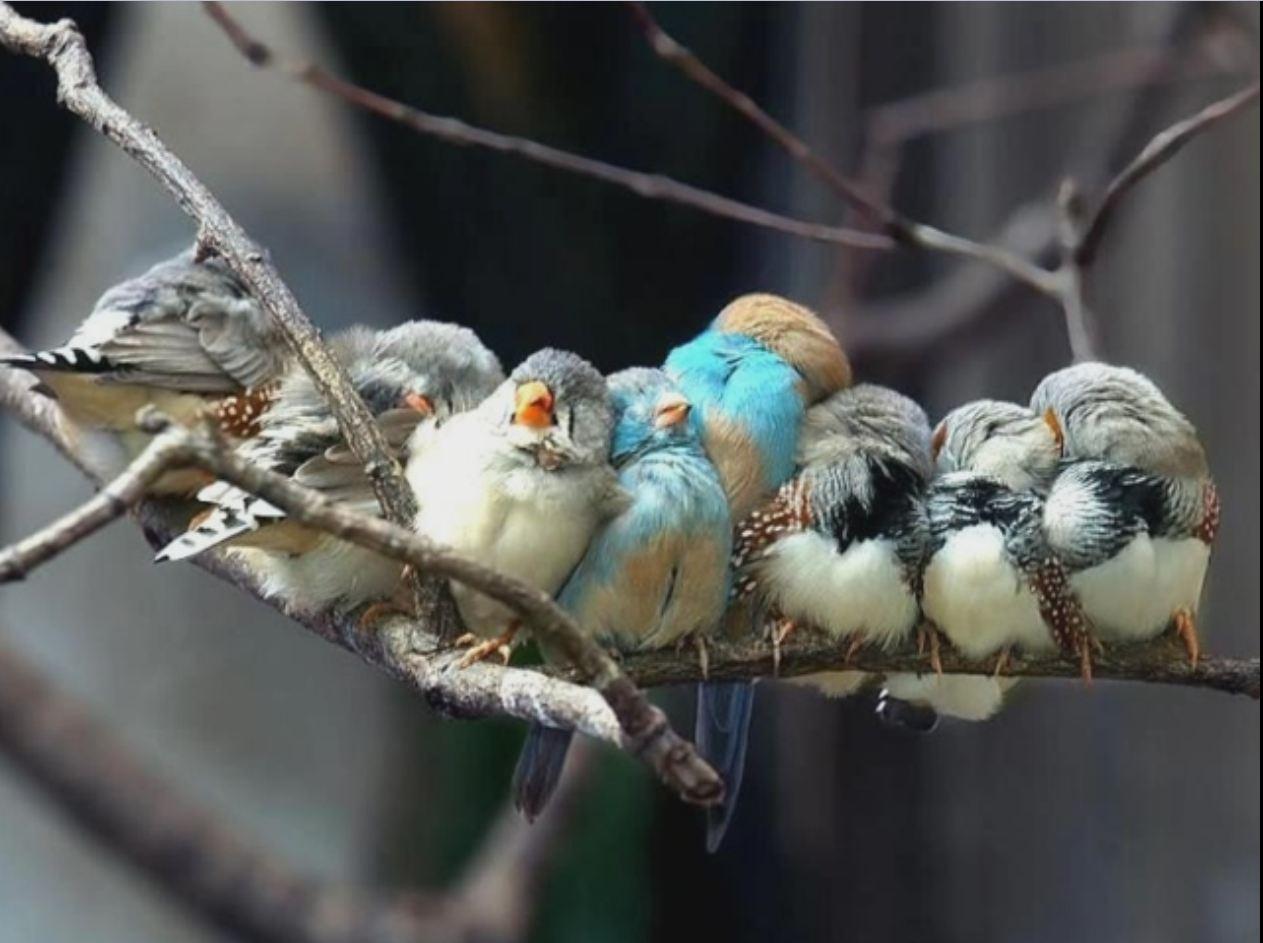 Птичья подборка