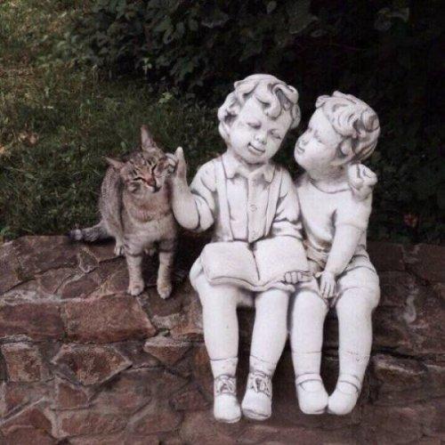 Милые и позитивные котики с …