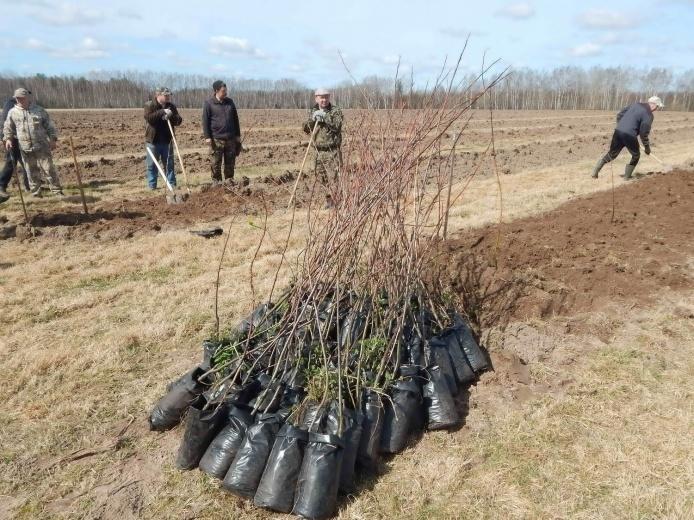 В Нижегородской области заложен яблоневый сад