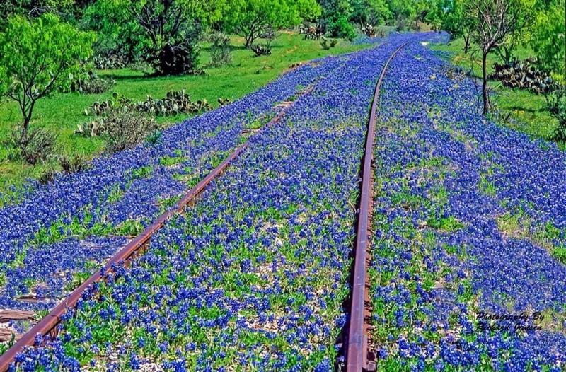 Железная дорога в Техасе заброшенное, красиво, мир без людей, природа берет свое, фото, цивилизация