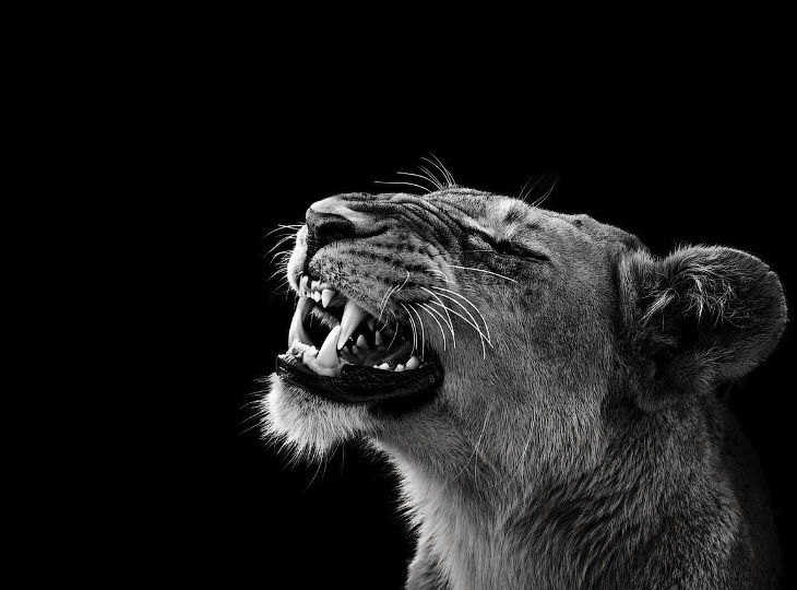 Невероятные портреты диких животных