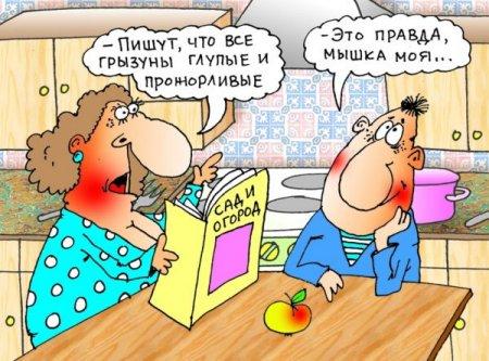 1421592095_myshka (450x333, 195Kb)