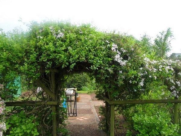 Садовые арки с зеленью.