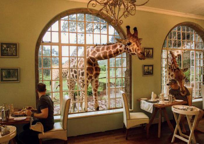 Ресторан с жирафами в Кении.