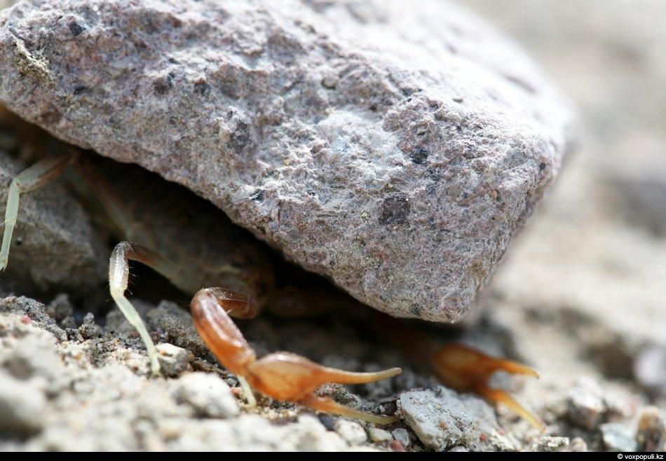 Пауки, скорпионы, фаланги обычно скрываются от наших глаз