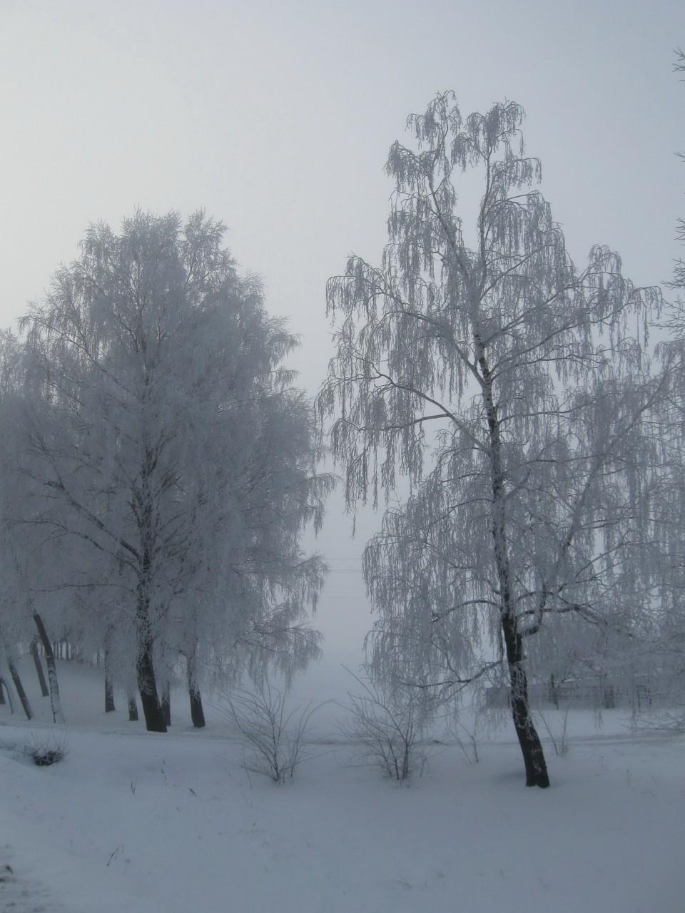 Зимние деньки
