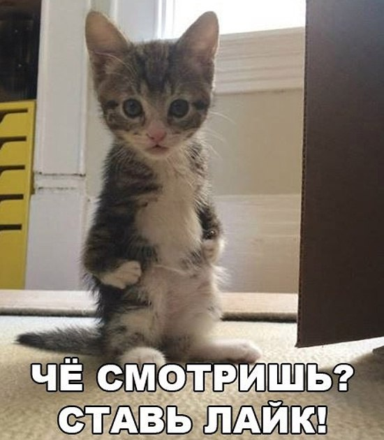 Веселые котики и кошечки в ф…