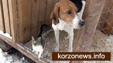 Собака приютила в будке кошку, брошенную хозяевами