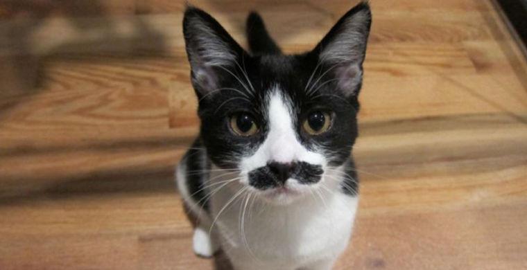 Усатый кот из Петербурга спел по-грузински