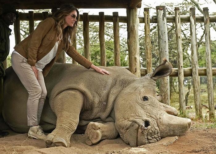 Фотограф снял прощание с последним в мире белым носорогом. До слез!