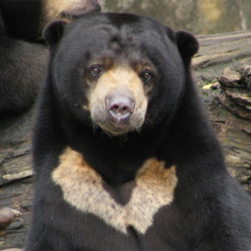 Животные от А до Я. Медведи