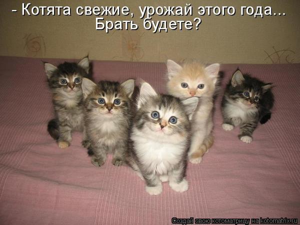 ЛИСА НЕ ЗНАЛА, ЧТО У ВОРОНЫ ТАКАЯ КРЫША))