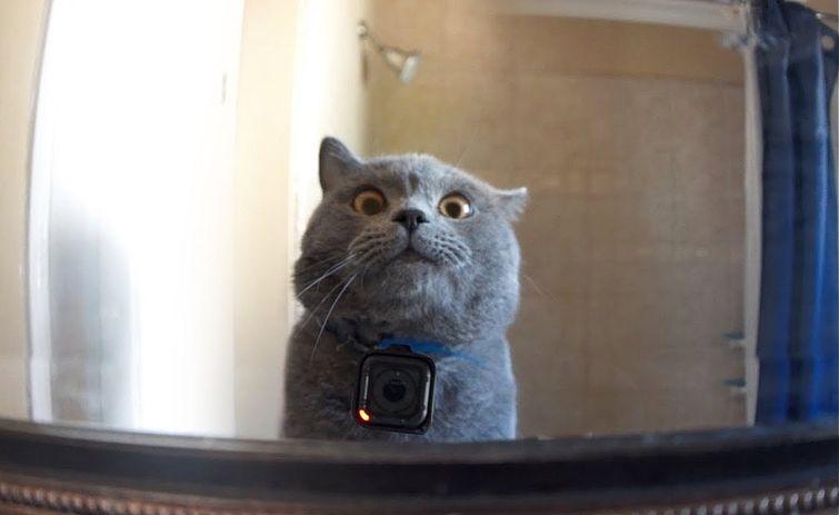 Что делает ваш кот, когда вас нет дома