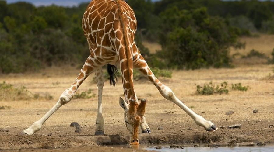 6 невероятных созданий нашей планеты, которых просто не может существовать