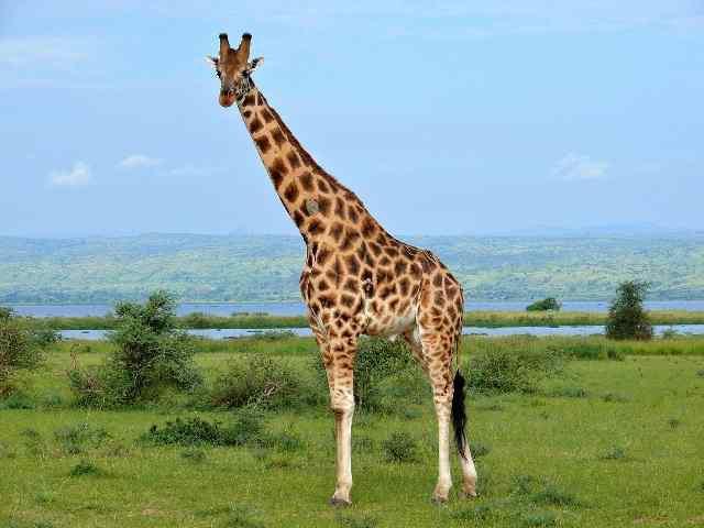 Топ-15 животных с экстраординарными качествами
