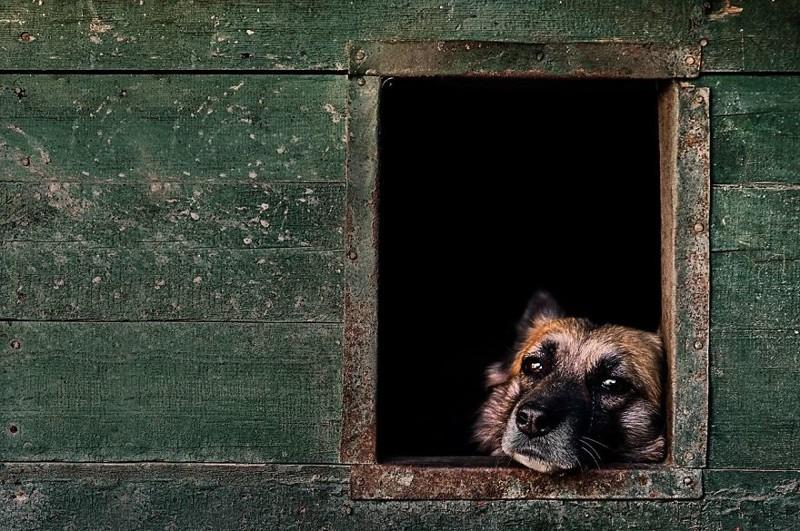 """2 место в категории """"Старички"""" - Игорь Абрамович, Великобритания Кеннел клаб, животные, конкурс, лондон, портрет, собаки, фото, фотография года"""
