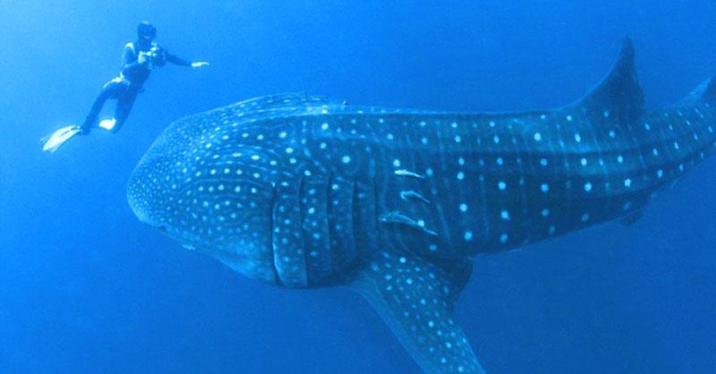 Этот морской великан схватил за руку дайвера и попросил о помощи