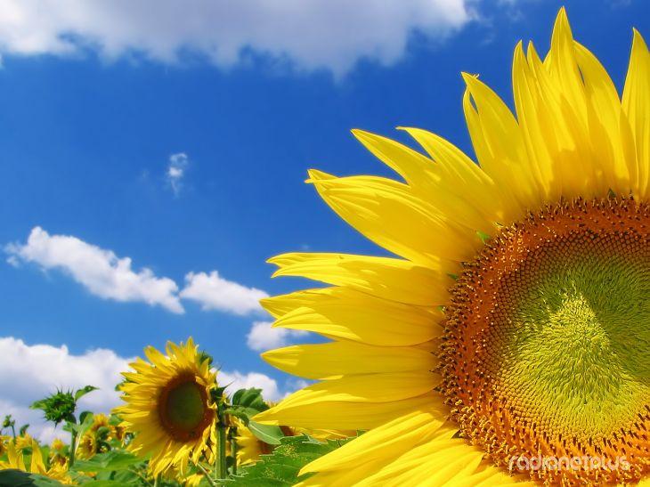 Цветы на рабочий стол (50фото)