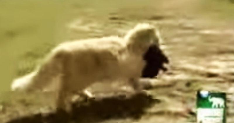 Каждый день кошка воровала у собаки щенков. Вскоре стало понятно, зачем она это делала!