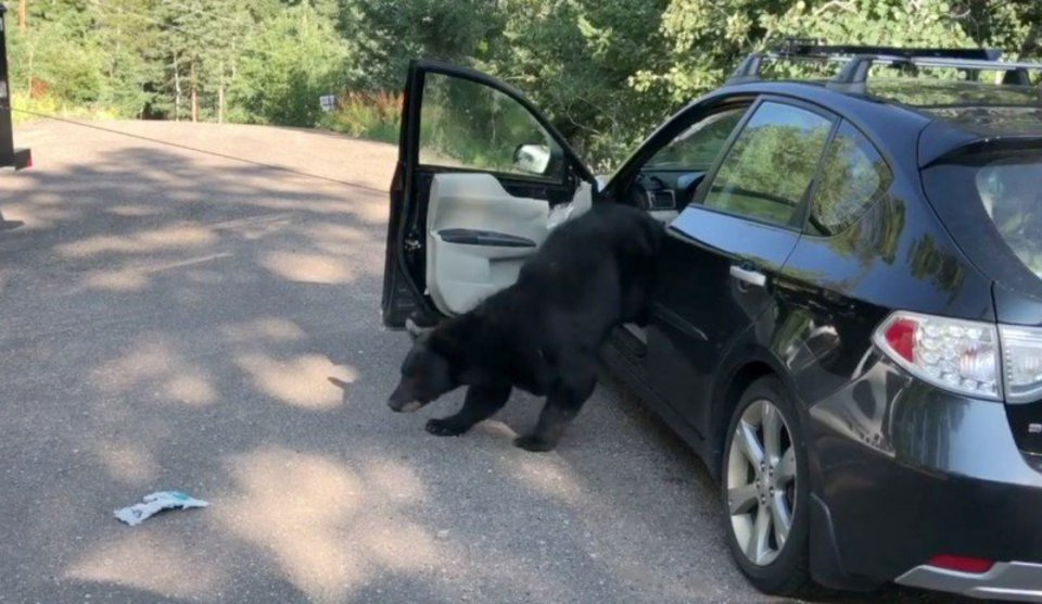 Медведь залез в машину за ба…