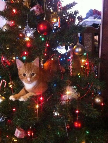 Когда в доме есть кот, с новогодней ёлкой может случиться всякое